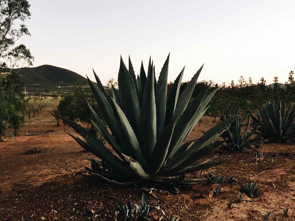 Casa Mayoral, Valle de Guadalupe | © Life and Food