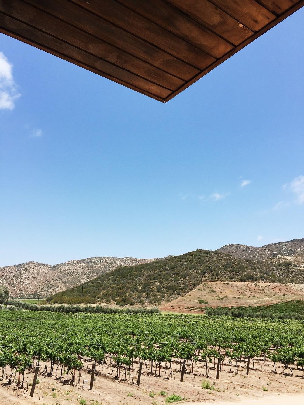 Viña de Frannes, Valle de Guadalupe | ©Life & Food