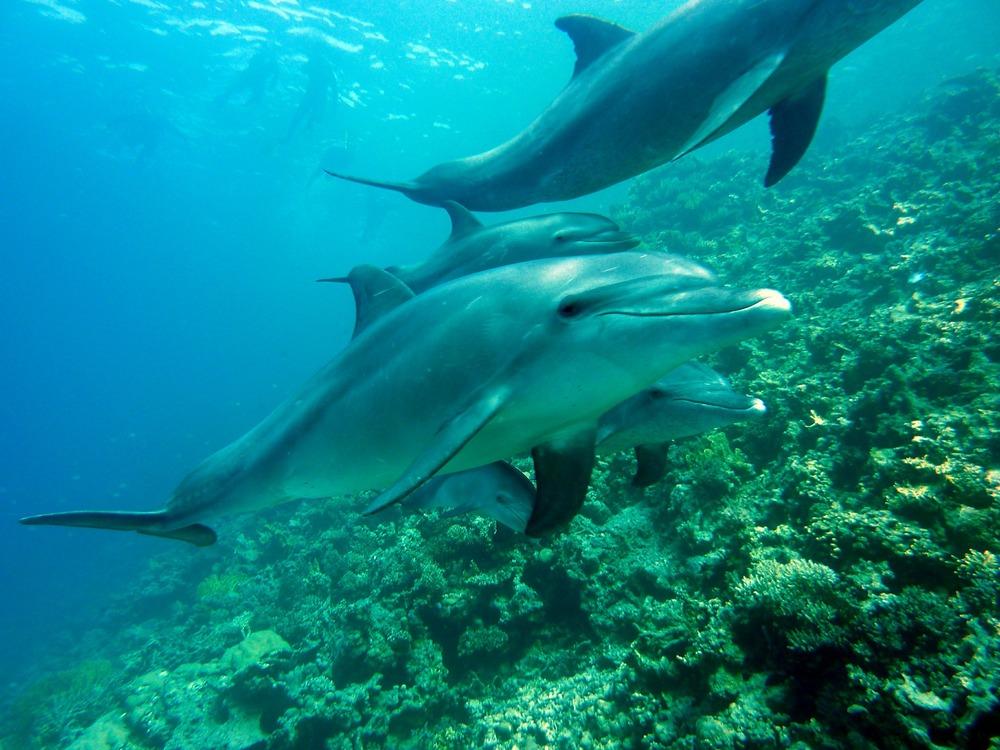 dolphins-378217_1920.jpg