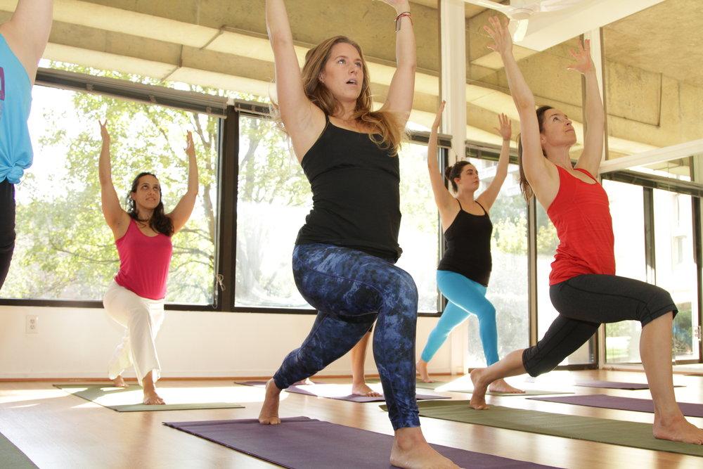 msy beginner yoga