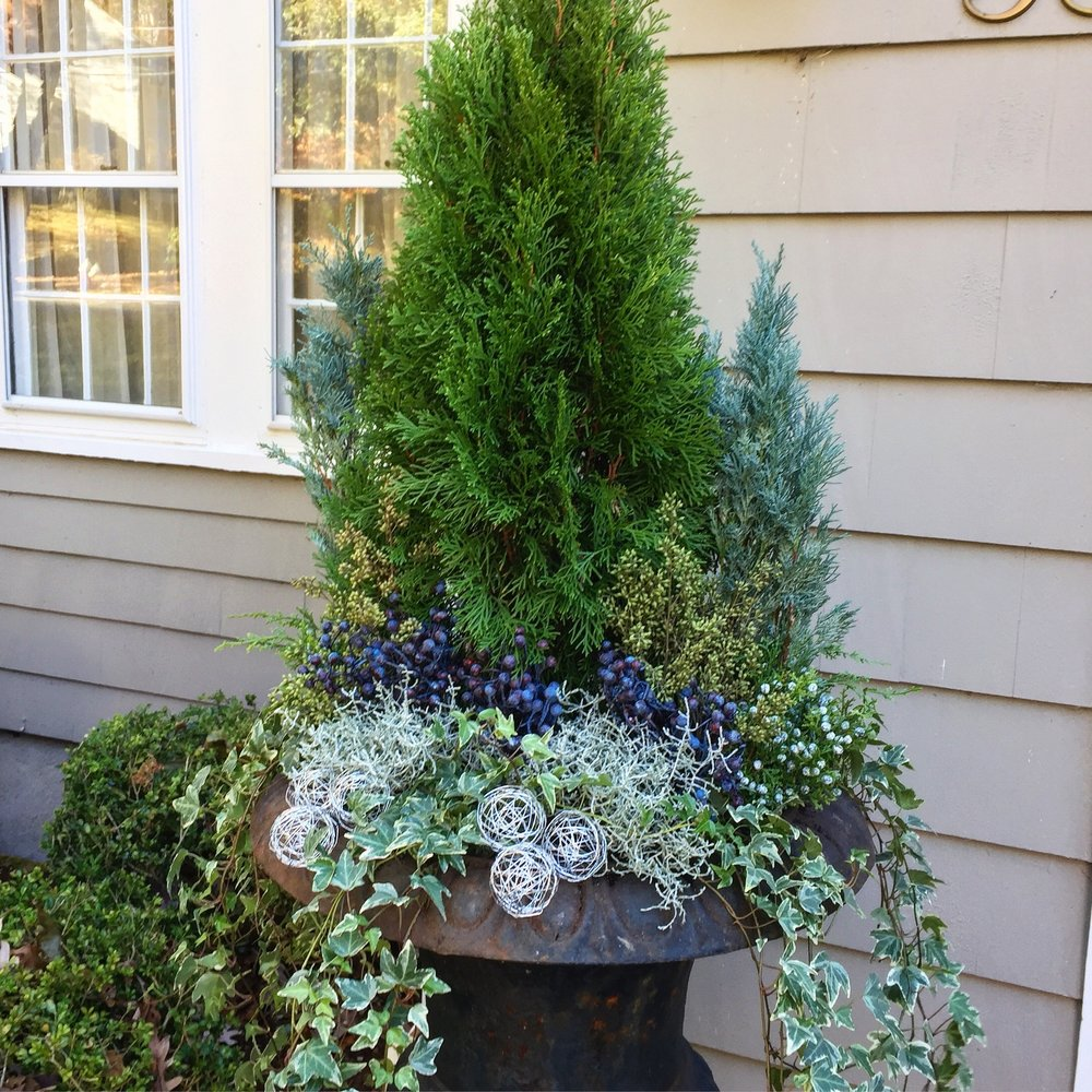 Winter container with berries and evergreens.