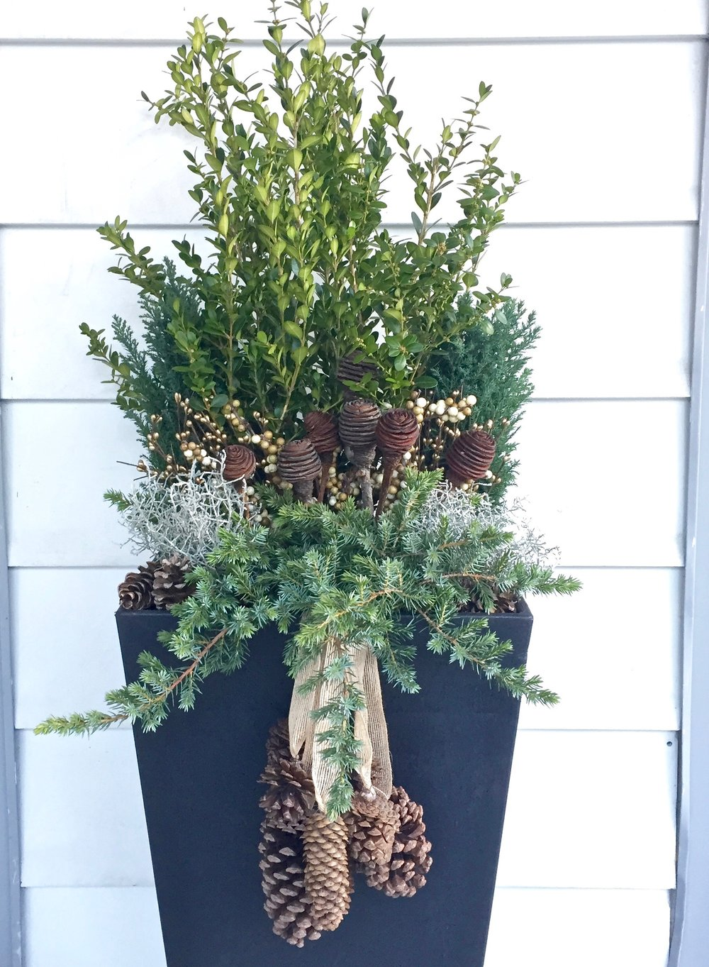 Winter container of boxwood, evergreens and pinecones.