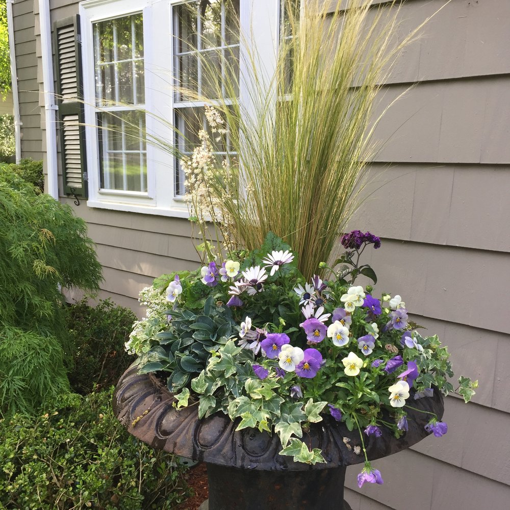 Shade loving container in shades of blue featuring violets, grasses, hosts, ivy and tiarella.
