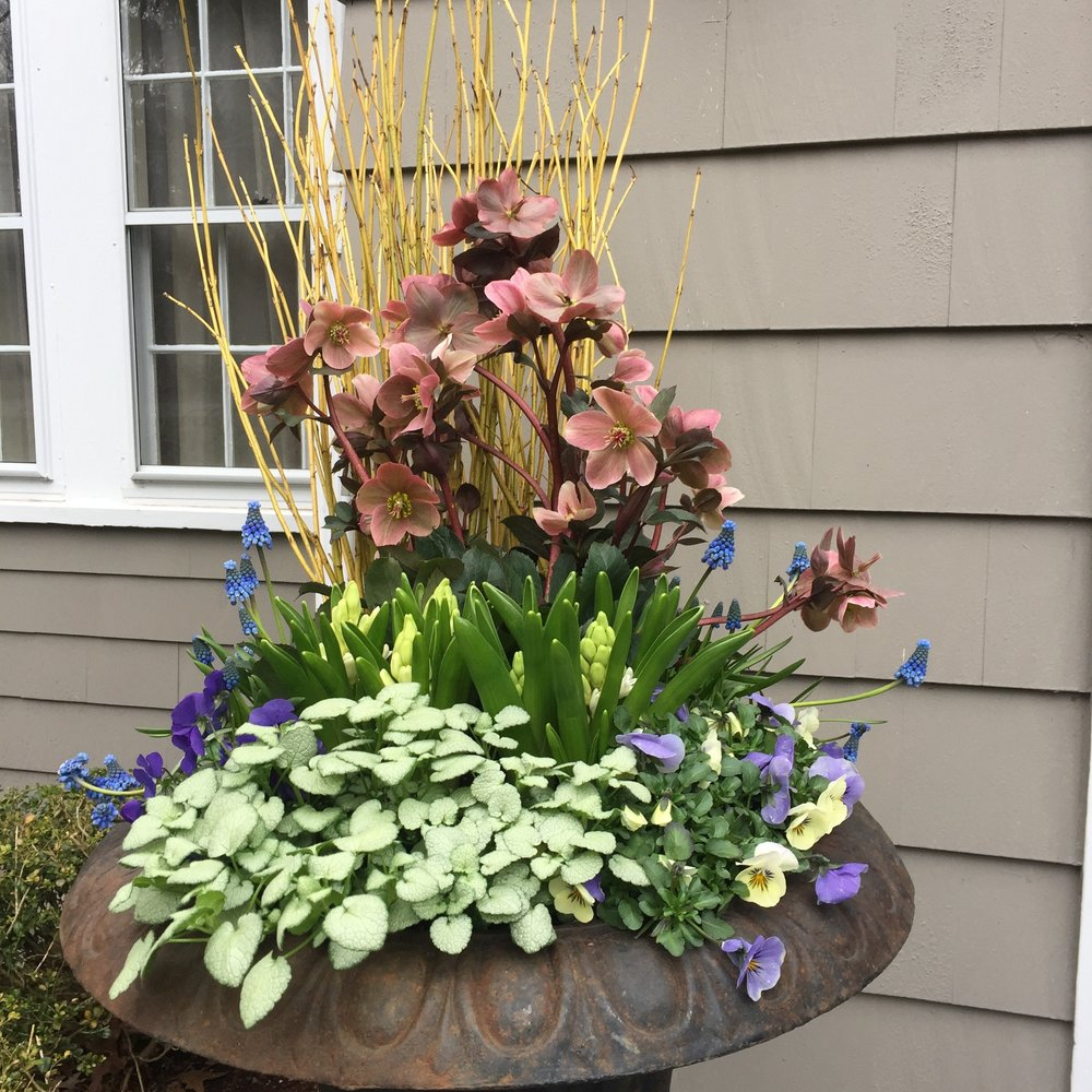 This large urn is filled with hyacinths, muscari, hellebore, violets and lamium for a stately entrance.