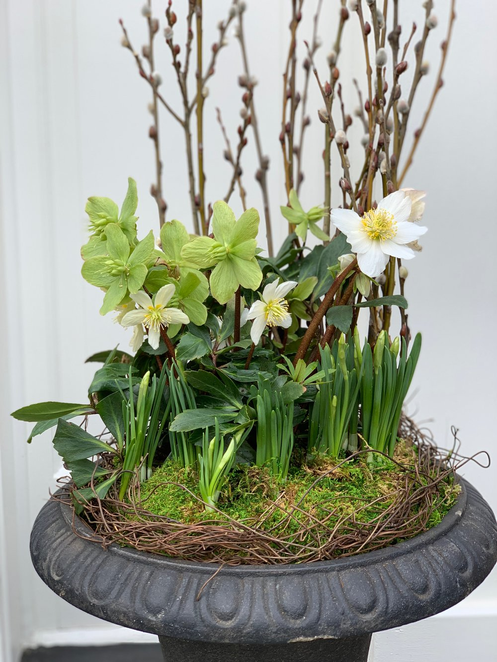 Early Spring container with miniature narcissus, hellebores and pussy willow.