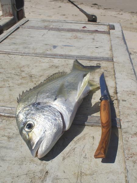 Opinel filleting knife