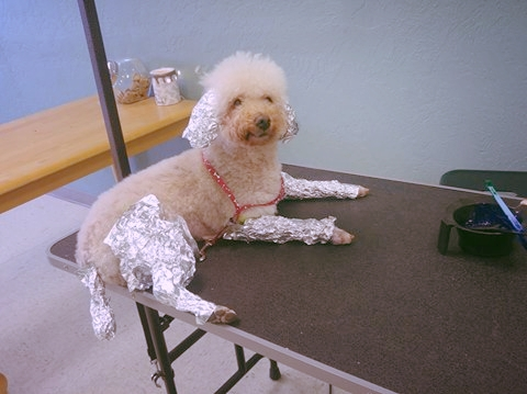 Yes, we really do canine foils.
