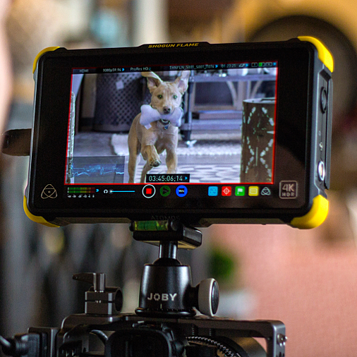 We couldn't resist posting this one! #zekeofellecor 🐶  Thank you @atomos_news for making our life easier!