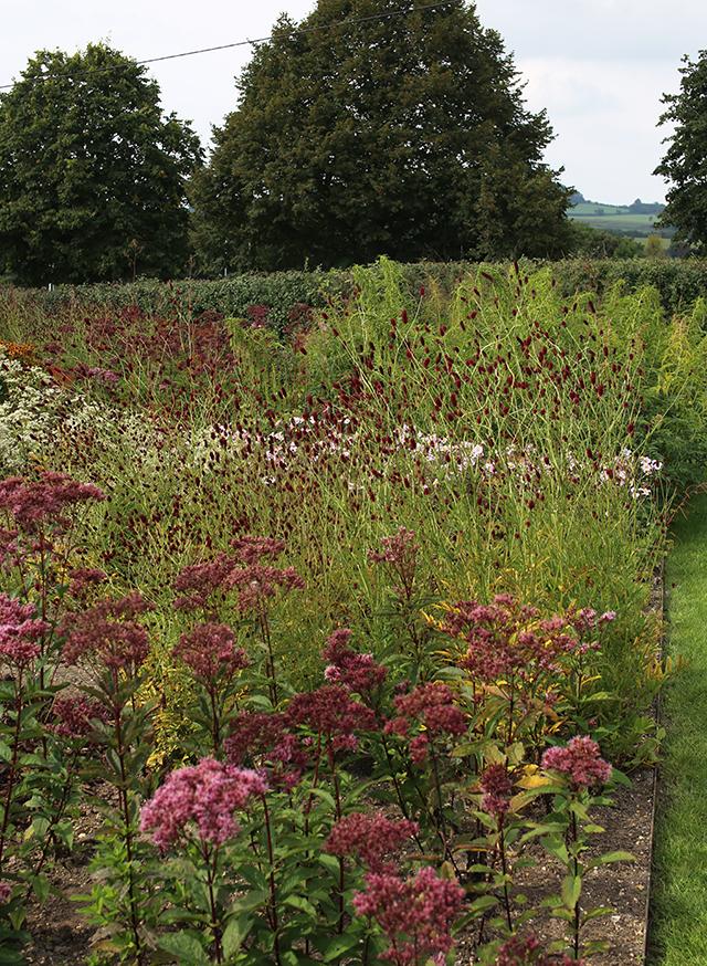 piet-oudolf-interview-hauser-wirth-somerset-garden-bruton-perenni (2)