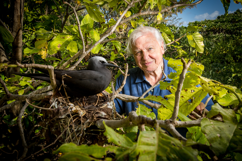 Great Barrier Reef with David Attenborough-BBC