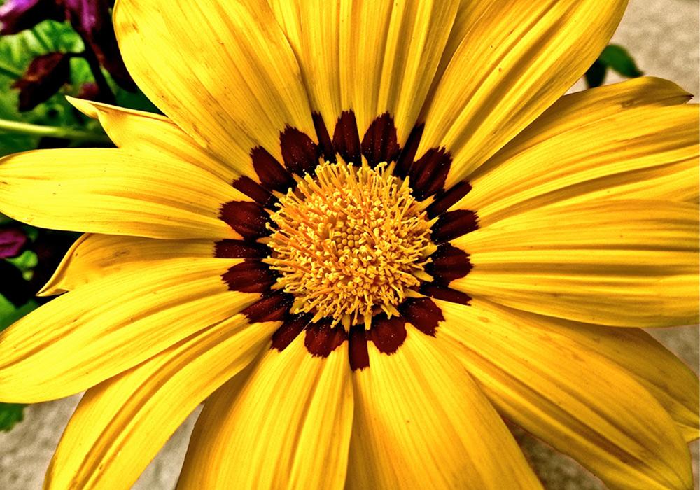 lindsay_michelle_flower25.jpg