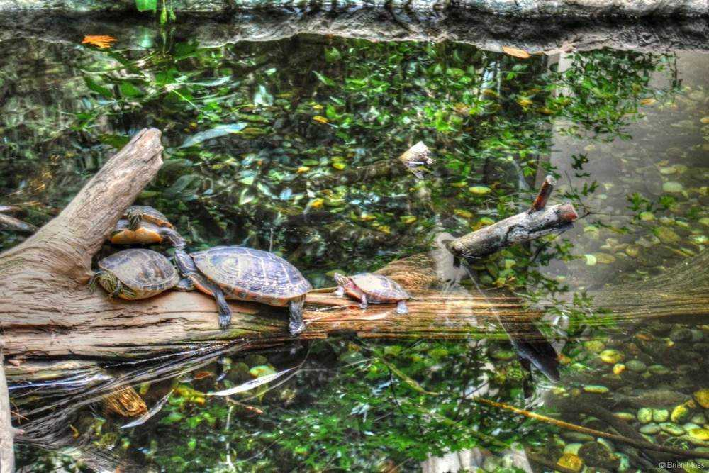 red slide turtles on log