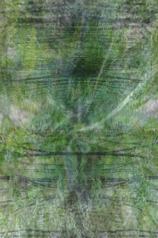 karl-denson-degenerating-gears_brian-moss.jpg
