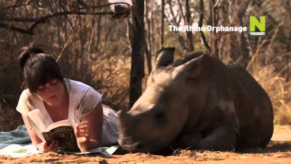 The Rhino Orphanage (NHU South Africa)