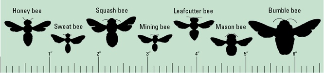 What kind of bees are visiting? Here's a quick guide provided by the Penn State Entomology Department.