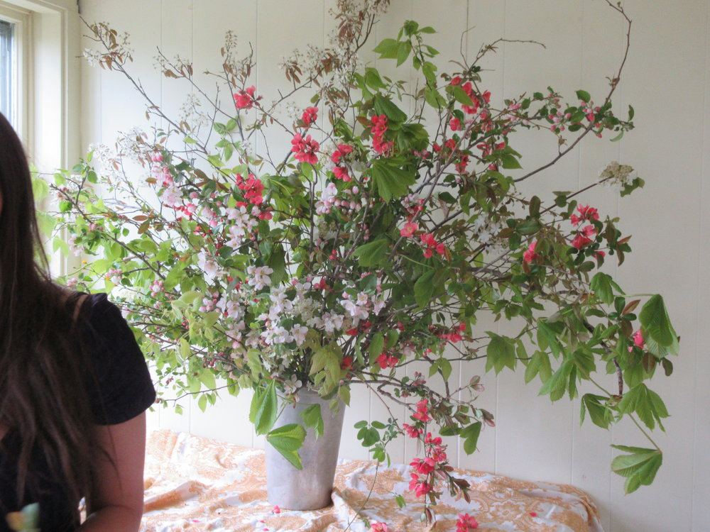 Forcing flowering branches for enjoying indoors. Hedgerow Flower Company, Nova Scotia.