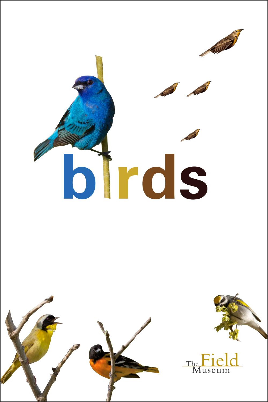 ID day_birds.jpg