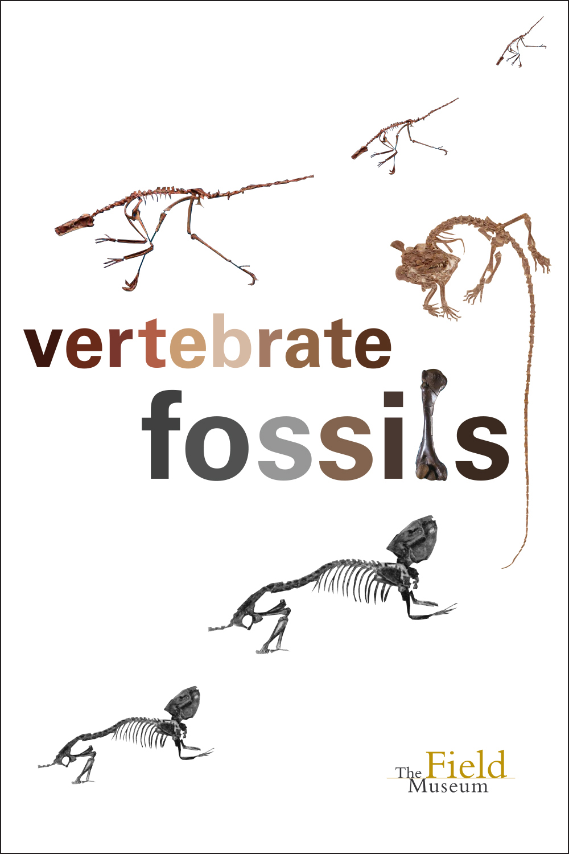 ID day_vert fossils.jpg