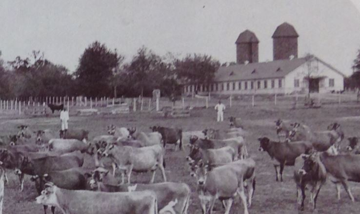 Penal Farm Dairy that was located near Mullins Station Road ( Shelby County Penal Farm , c1946).