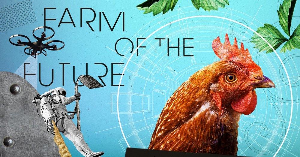 FB - chicken.jpg