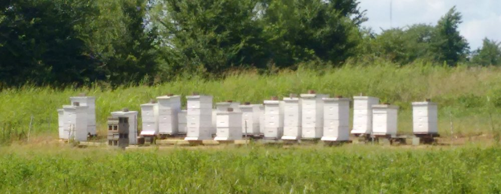 Memphis Area Beekeepers