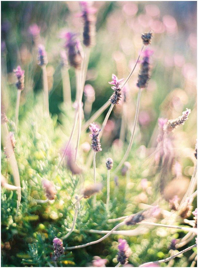 Lavender nature Ibiza Mallorca