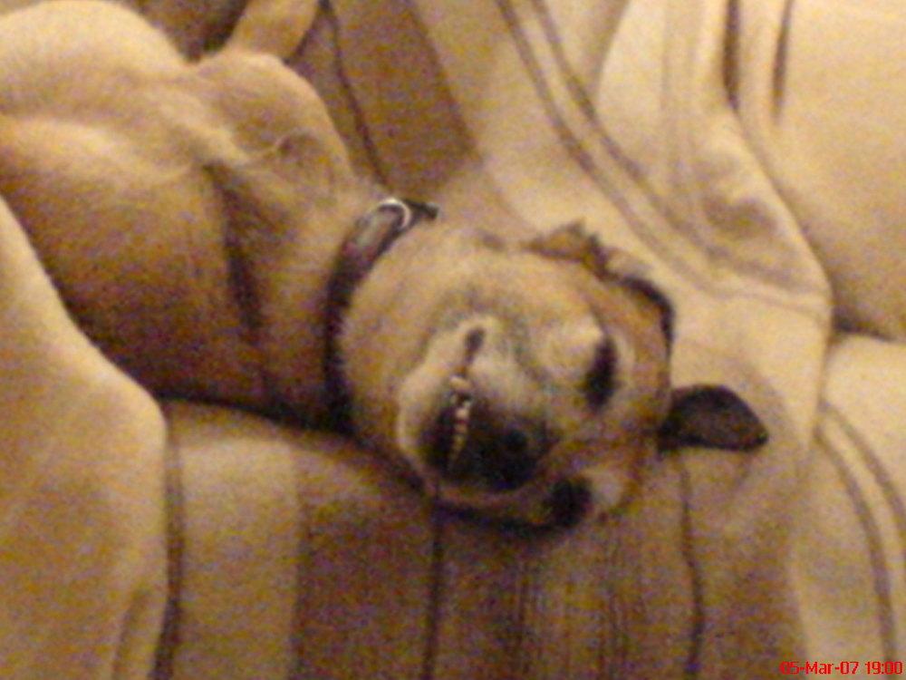 Sleepy Duncan
