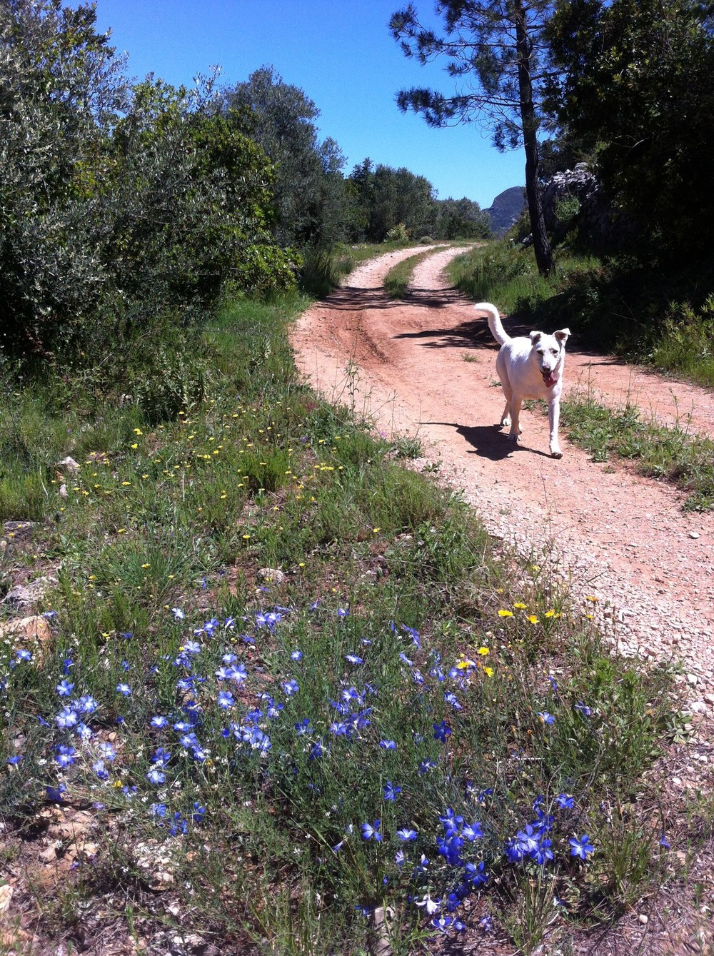 Blanca and 'bluebells'.