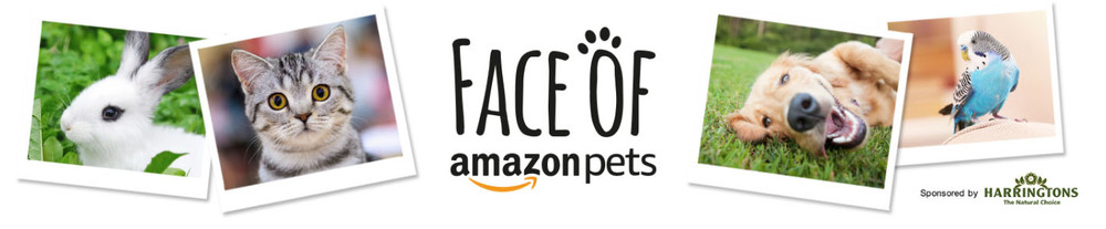 Competition. The Face of Amazon Pets