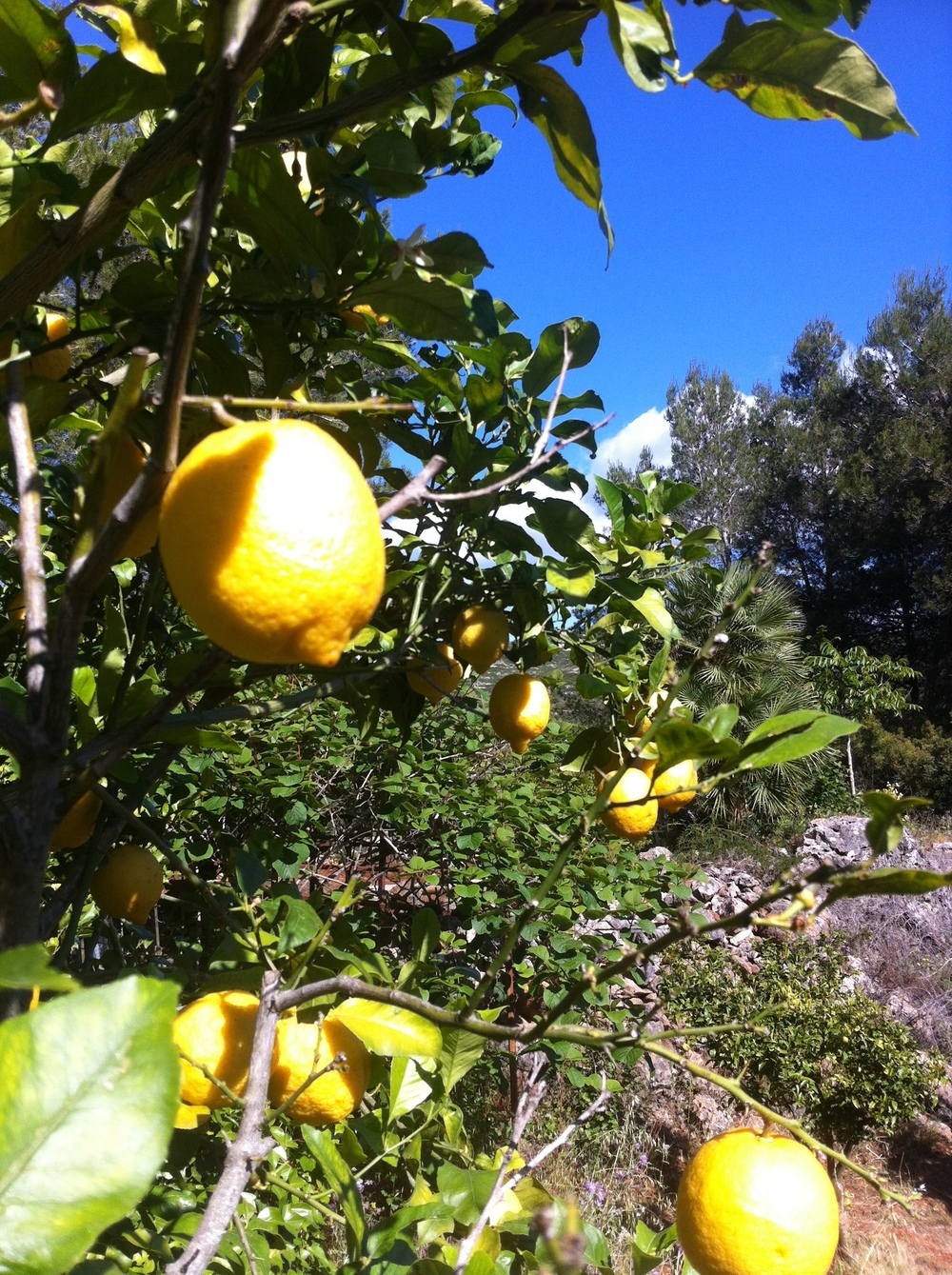 Scrumping for Lemons