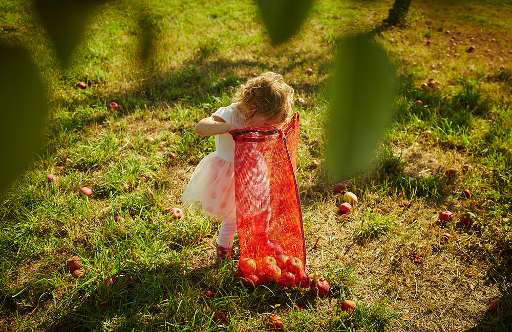 091915_Apple_Picking_OuthouseOrchards_211.jpg