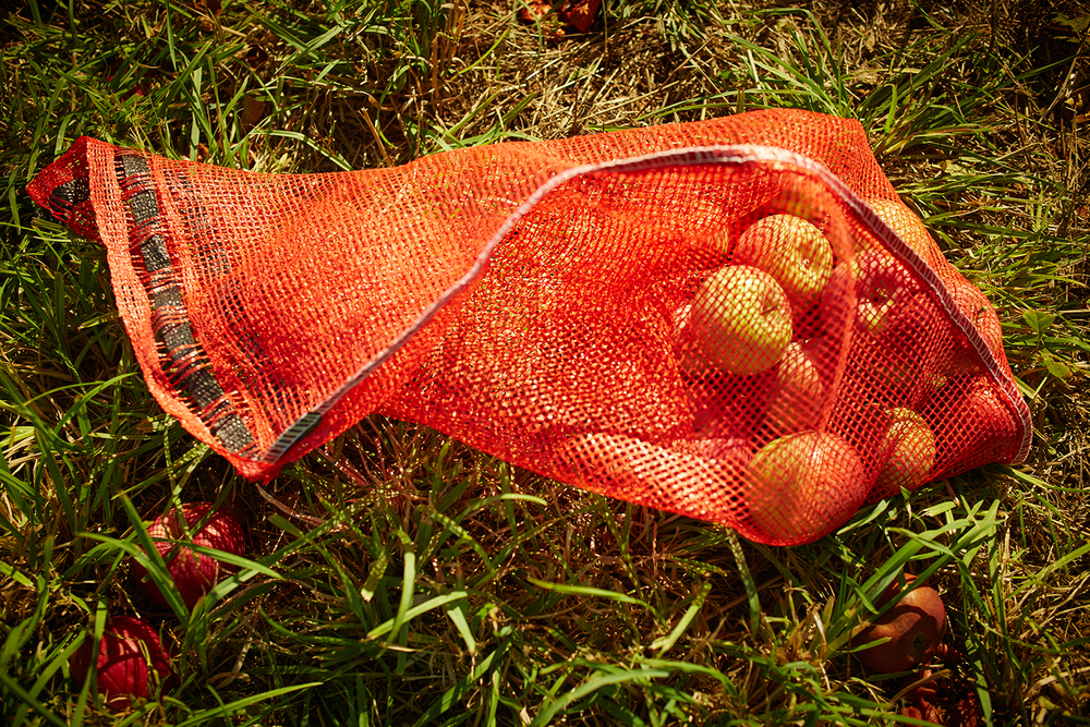 091915_Apple_Picking_OuthouseOrchards_245.jpg