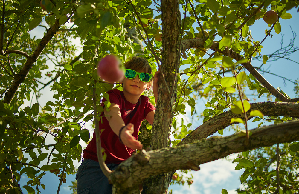 091915_Apple_Picking_OuthouseOrchards_406.jpg