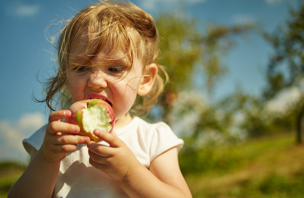 091915_Apple_Picking_OuthouseOrchards_455.jpg
