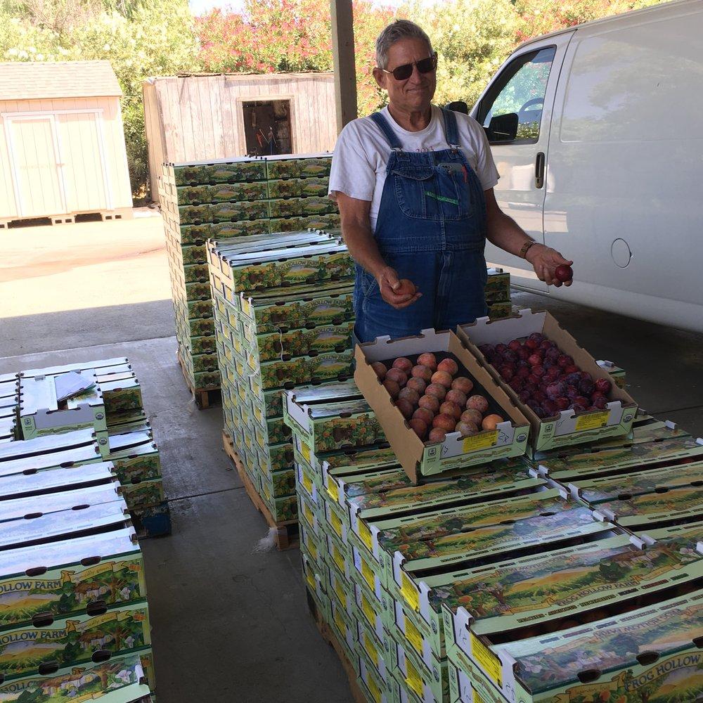 New and Old - Farmer Al with the O.G. Santa Rosa Plum and the new Zaigler Genetics hybrid Dapple Dandy Pluot