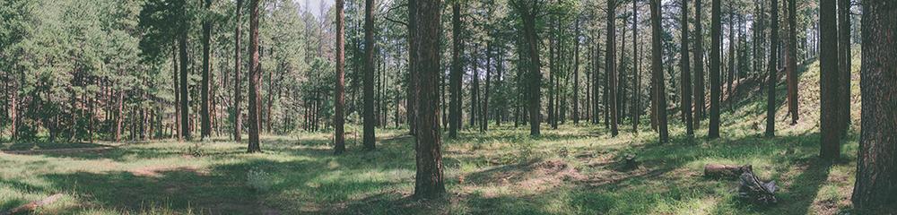 ForestPanaoramas.jpg