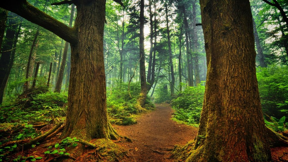 forest-path-wallpaper-32564-33311-hd-wallpapers.jpg