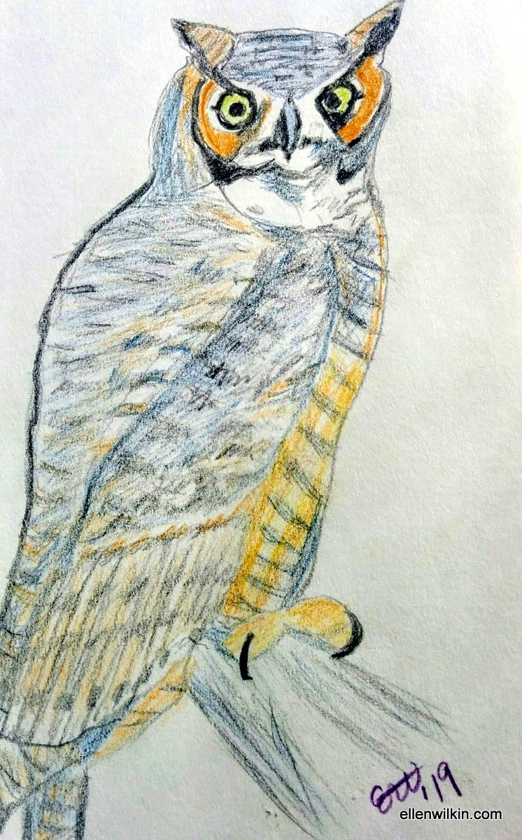 Sketch of a Great Horned Owl from  Sibley's Guide to North American Birds  by Ellen A. Wilkin.