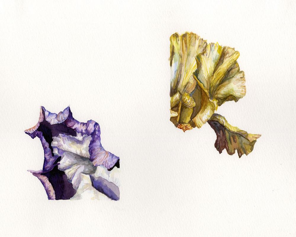 Iris Opposites