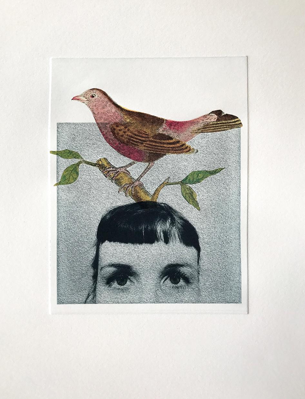 BirdBrain.jpg