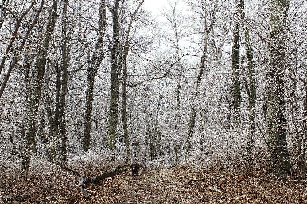 Appalachian Trail Winter