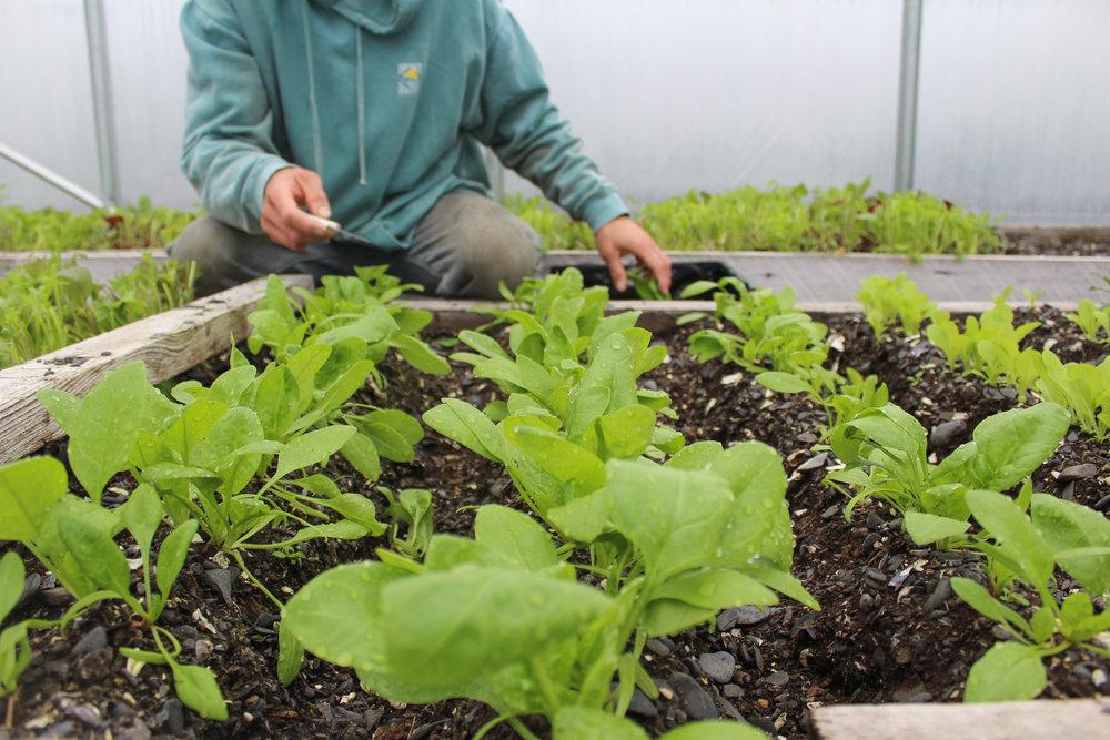 Organic Garden Greenhouses