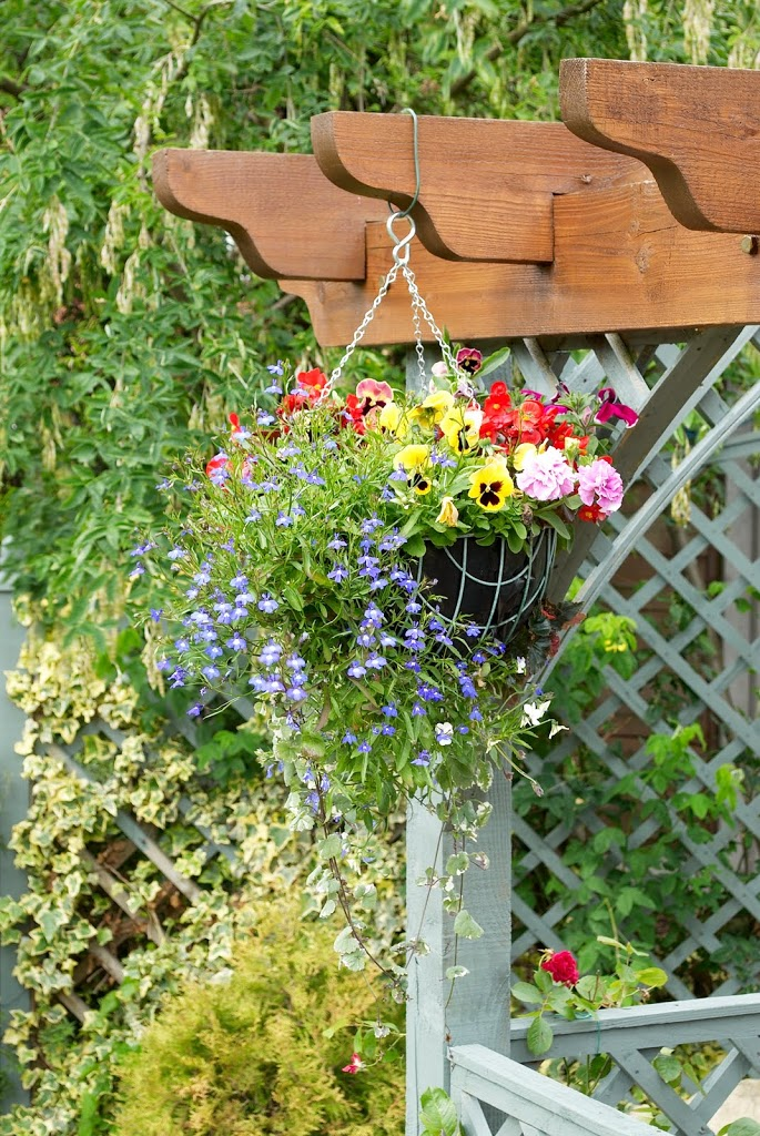 hanging-basket-on-pergola-200x3001.jpg
