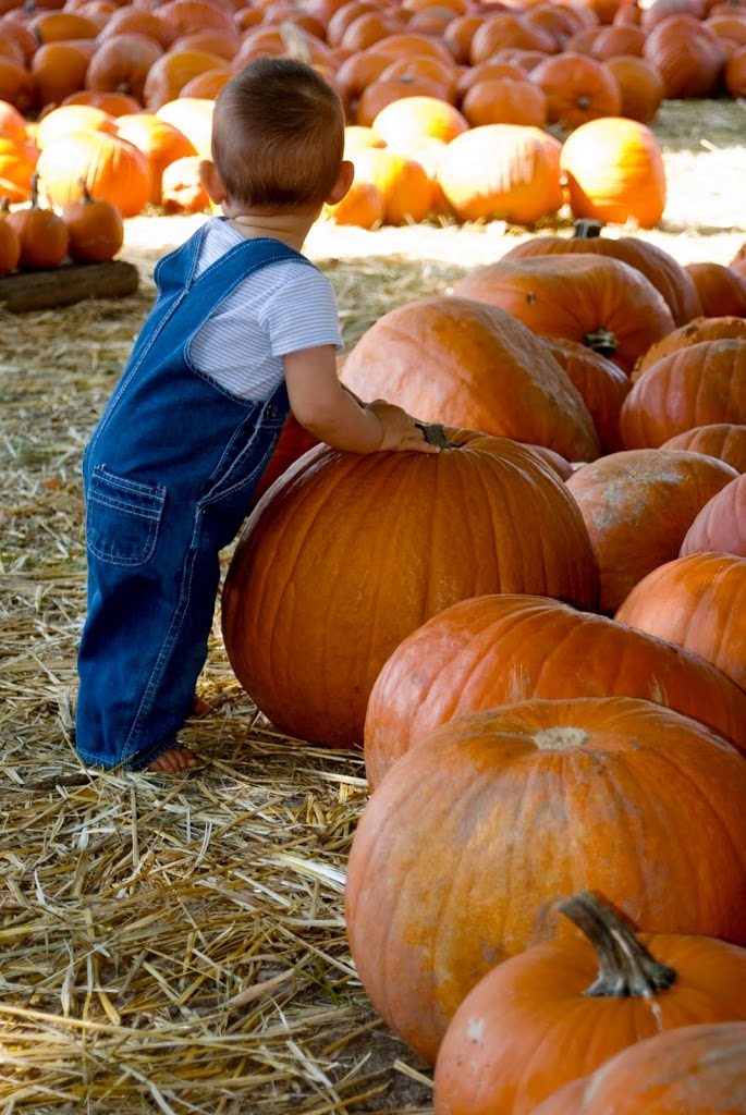 pumpkin-picking-200x3001.jpg