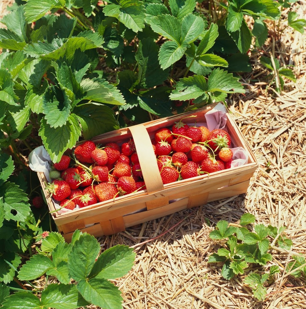 strawberries-297x3001.jpg