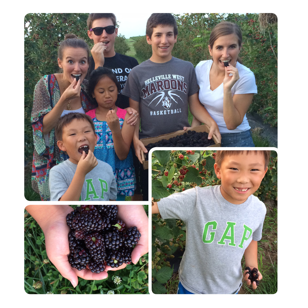 blackberry picking for blog