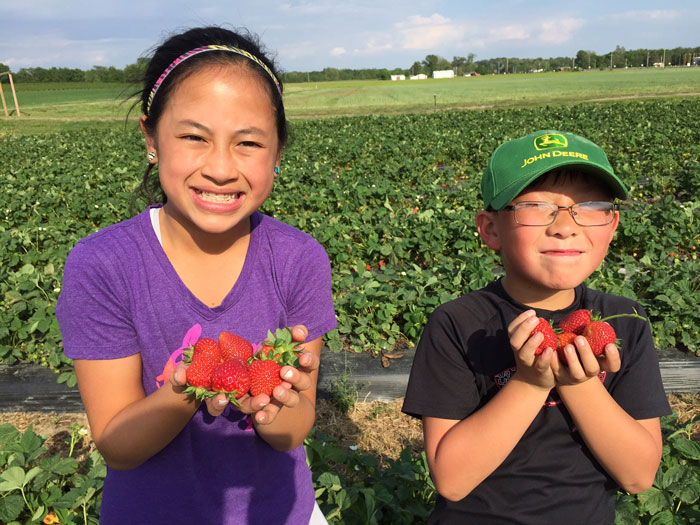Pick Your Own Strawberries at Eckert's