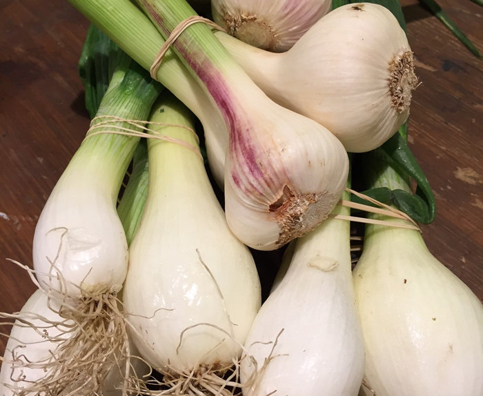 homegrown garlic and onion