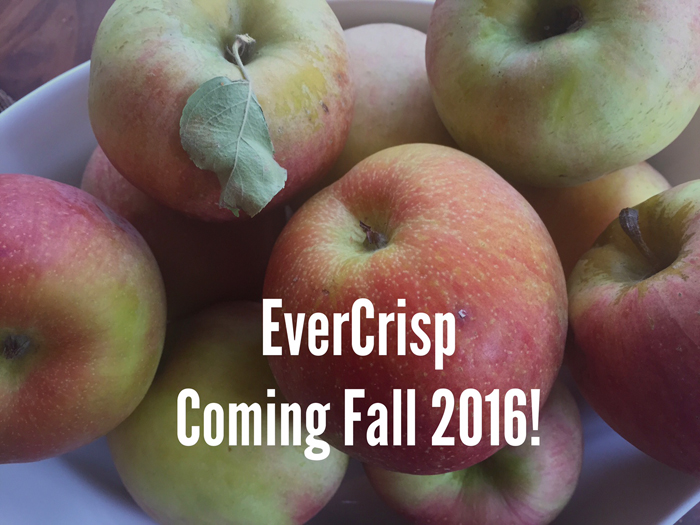 Evercrisp Apples