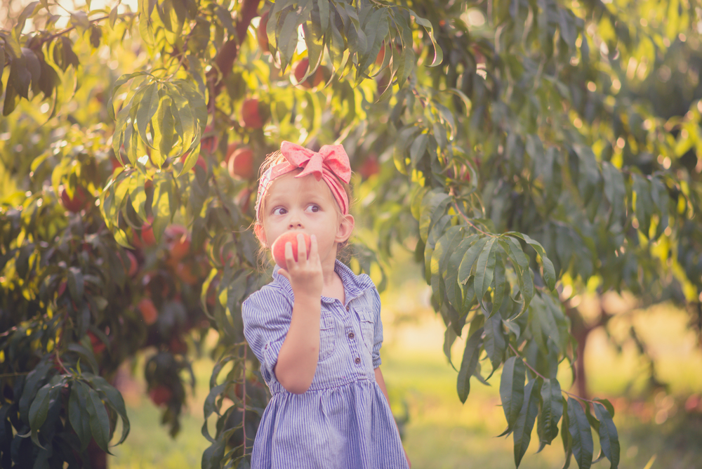 peach_picking